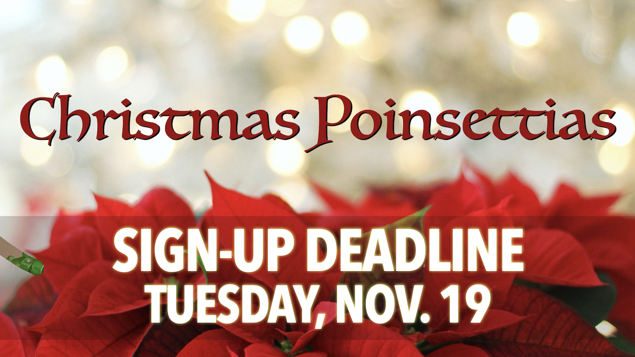 Sign-up to Donate Christmas Poinsettias by Tuesday, Nov. 19