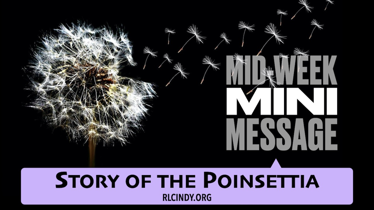 Mid-week Mini Message for RLC Kids: Story of the Poinsettia